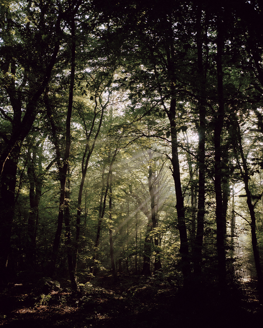 Forest at dawn from the series In a light that is leaving by Neha Hirve