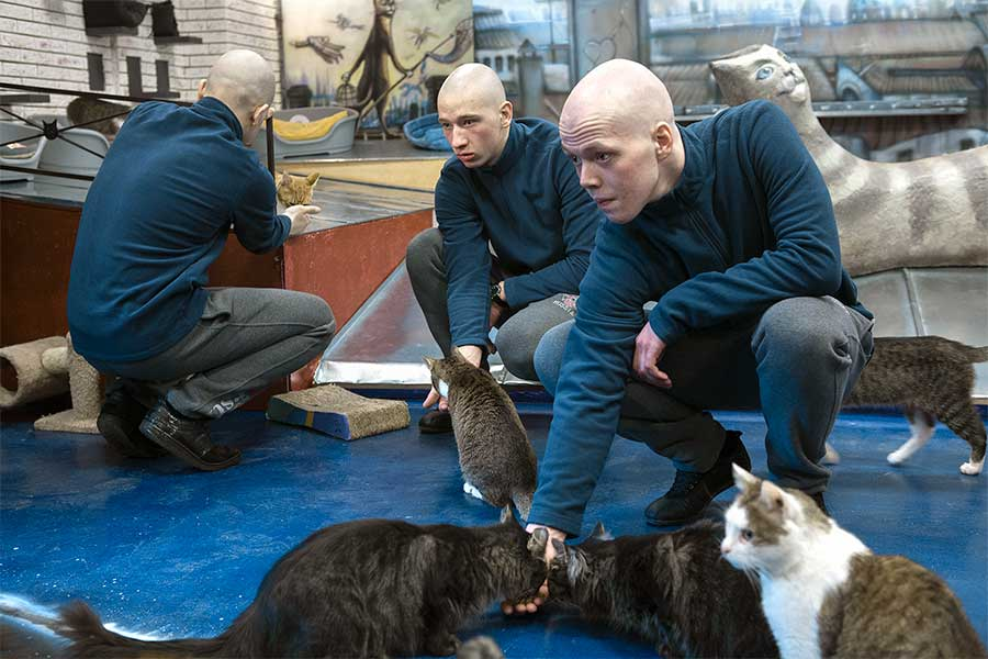 The prisoners at the Cat Museum from the series Boys by Tatiana Bondareva